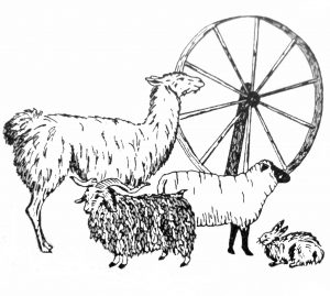 Fall Fiber Festival and Sheep Dog Trials at Montpelier