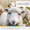 cute sheep face -Maryland Sheep & Wool Festival virtual class registration now open
